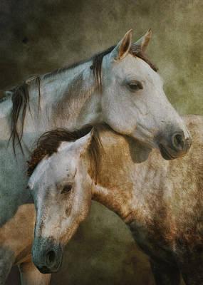Gray Horse Photograph - Amigos by Ron  McGinnis