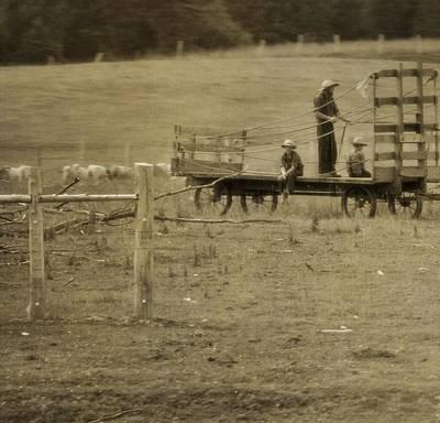 Amish Farms Photograph - Amish Boys On The Farm by Dan Sproul