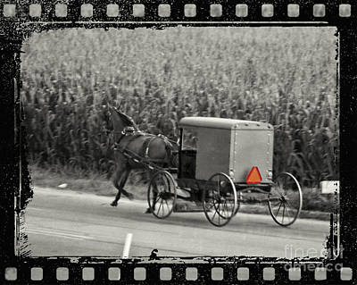 Horse And Buggy Digital Art - Amish Buggy Monochrome by Terry Weaver