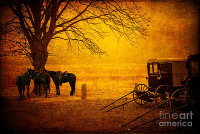 World Forgotten - Amish Buggy by Todd Bielby
