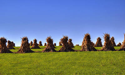 Photograph - Amish Corn Harvest by Deb Buchanan