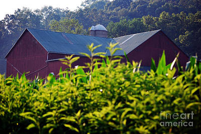 Amish Photograph - Amish Country 32 by Pittsburgh Photo Company