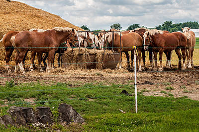 Photograph - Amish Draft Horses by Gene Sherrill
