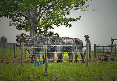 Photograph - Amish Farmer by Dyle   Warren