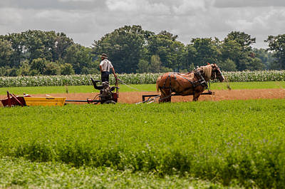 Photograph - Amish Farmer Harvesting Hay by Gene Sherrill
