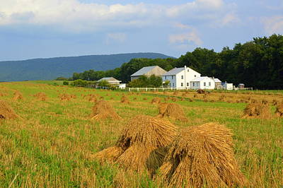 Photograph - Amish Harvest #1 - Milroy Pa by Joel E Blyler