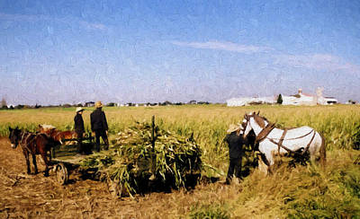 Painting - Amish Harvest by Boyd Miller