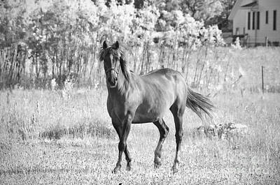 Amish Photograph - Amish Horse Black And White by David Arment