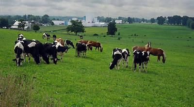 Amish Pastureland  Art Print