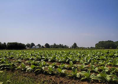 Ethridge Photograph - Amish Tobacco Fields by Kathy Clark