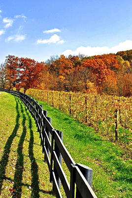 Wine Vineyard Photograph - Amish Vinyard by Frozen in Time Fine Art Photography
