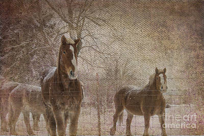 Amish Photograph - Amish Work Horses In Winter by David Arment