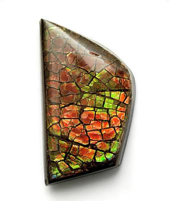 Ammolite Photograph - Ammolite Gemstone by Dorling Kindersley/uig