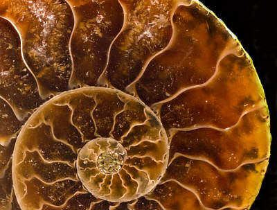 Photograph - Ammonite Agate Fossil by Jean Noren