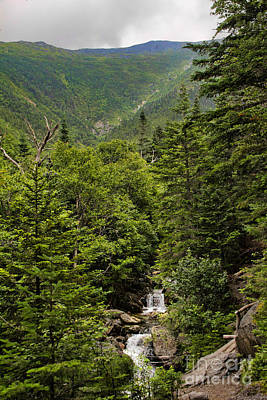 Photograph - Ammonoosuc Ravine by Jemmy Archer