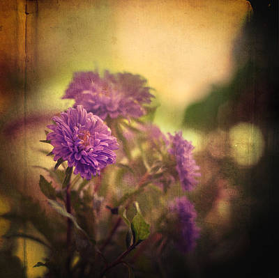 Photograph - Amnesia by Taylan Apukovska