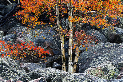 Fall Photograph - Among Boulders by Chad Dutson