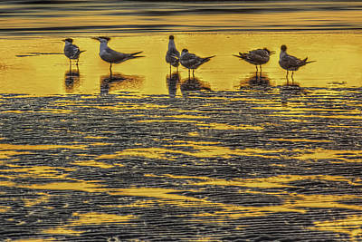 Shore Birds Photograph - Among Friends by Marvin Spates