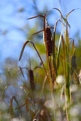 Photograph - Among The Cattails by Tracy Male