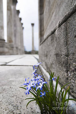 Floral Photograph - Among The Columns by Oscar Gutierrez