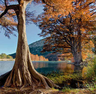 Among The Cypress Trees Art Print