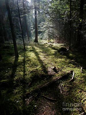 Photograph - Among The Moss by Steven Valkenberg