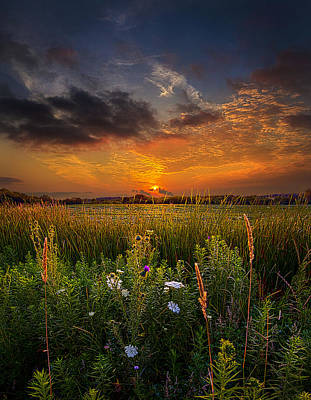 Wisconsin Wildflower Photograph - Among The Stillness by Phil Koch