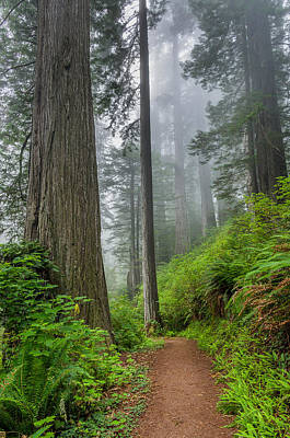 Photograph - Among The Tall Trees by Greg Nyquist