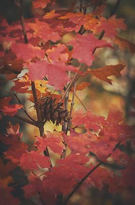 Amongst The Maple Leaves  Art Print