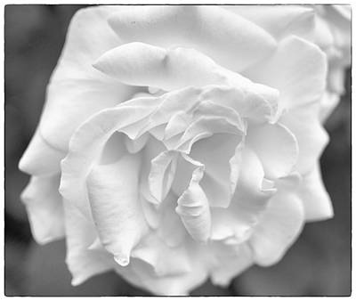 Photograph - Amor Blanco by Miguel Winterpacht