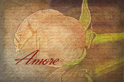 Photograph - Amore by Susan  McMenamin
