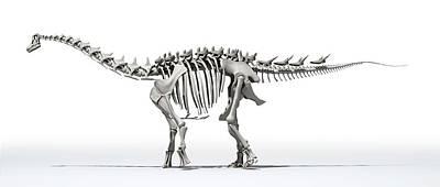 Paleozoology Photograph - Ampelosaurus Skeleton by Jose Antonio Pe�as
