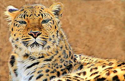 Photograph - Amur Leopard Elegance by Diane Alexander