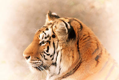 Photograph - Amur Tiger by Karol Livote