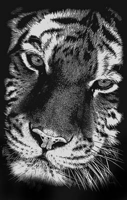 Photograph - Amur Tiger Portrait Bw by Ernie Echols