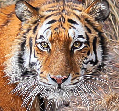 Amur Tiger Portrait Art Print by Diane Alexander