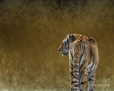 Photograph - Amur Tiger by Terri Waters