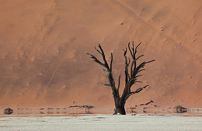 Sossusvlei Area Photograph - An Acacia Tree And Sand Dune by Alex Saberi