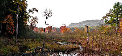 Autumn Photograph - An Adirondack Stream In Autumn by David Patterson