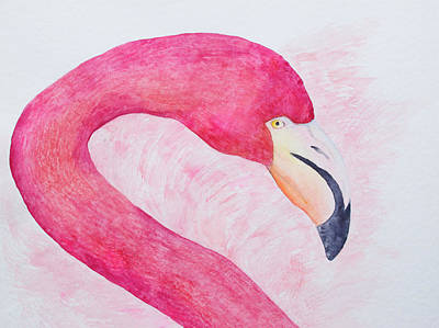 Painting - An American Flamingo In Galapagos by Patricia Beebe