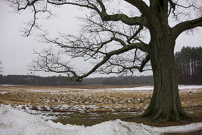 Appleton Photograph - An Appleton Tree And Field In Winter by David Stone