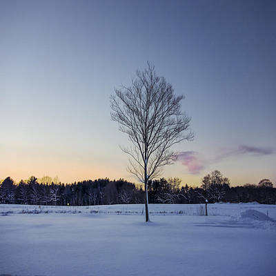 Appleton Photograph - An Appleton Tree At Dusk by David Stone