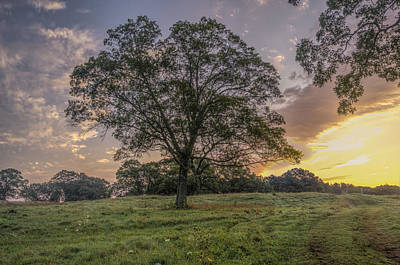 An Appleton Tree At Sunrise Art Print by David Stone