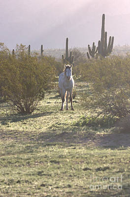 Art Print featuring the photograph An Arizona Morning by Ruth Jolly