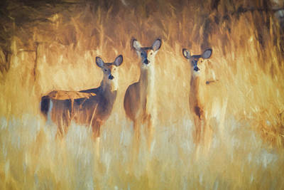Wall Art - Photograph - An Artistic Look At 3 White-tailed Deer Does by Martin Belan