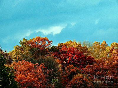 Photograph - An Autumn Day by Gena Weiser