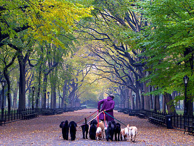 Photograph - An Autumn Dog Walk by Cornelis Verwaal