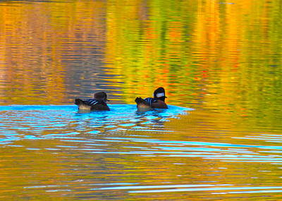 Photograph - An Autumn Morning Swim by Jean Wright