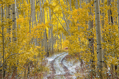 Photograph - An Autumn Path by Leland D Howard