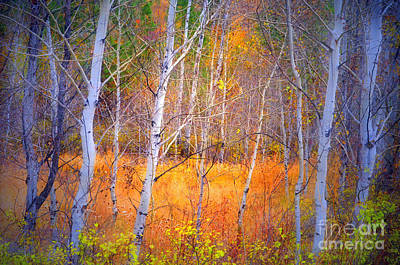 Photograph - An Autumn Symphony Of Colour by Tara Turner